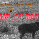 Camp Joy DOG